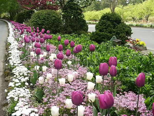 fall planting for spring color purple